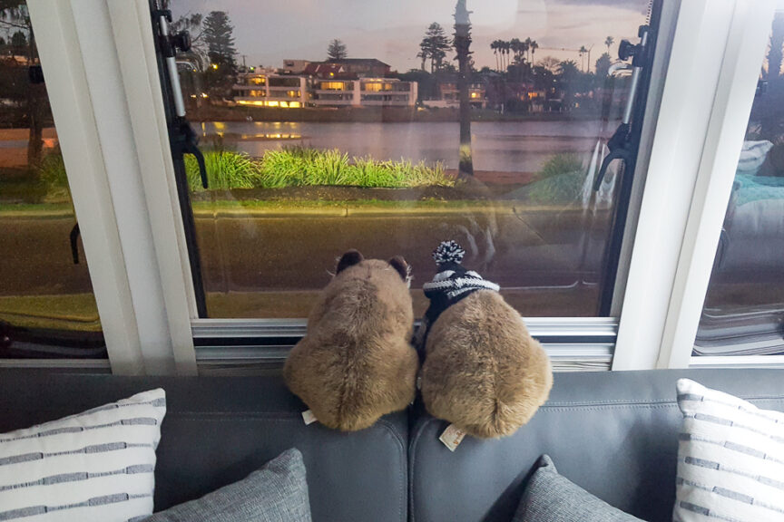 Wally & Wendy take in the view