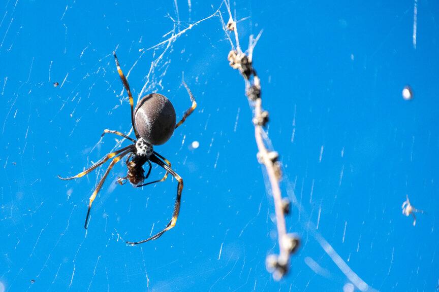 Nice spider (errr!)