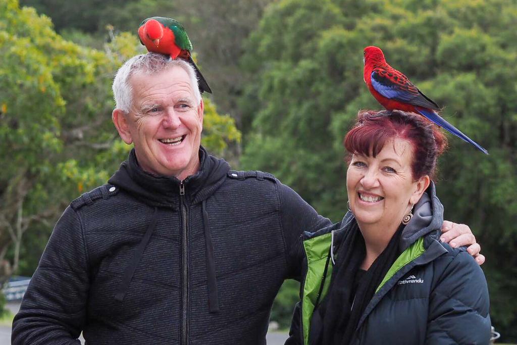 O'Reilly's birds QLD