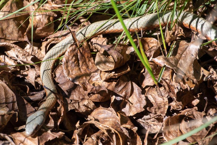 Nice small snake