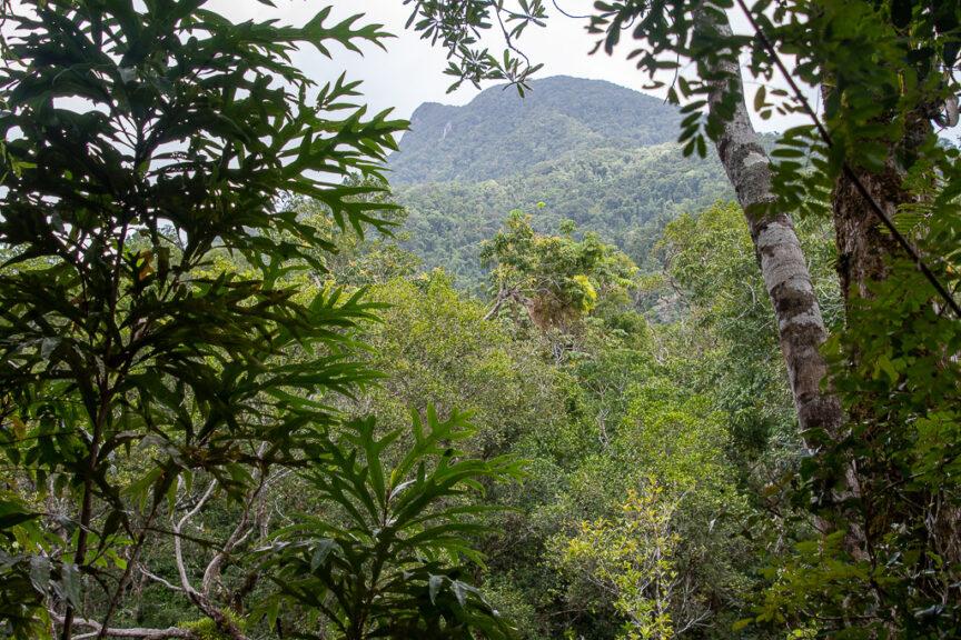 Manjal Dimbi (Mount Demi)
